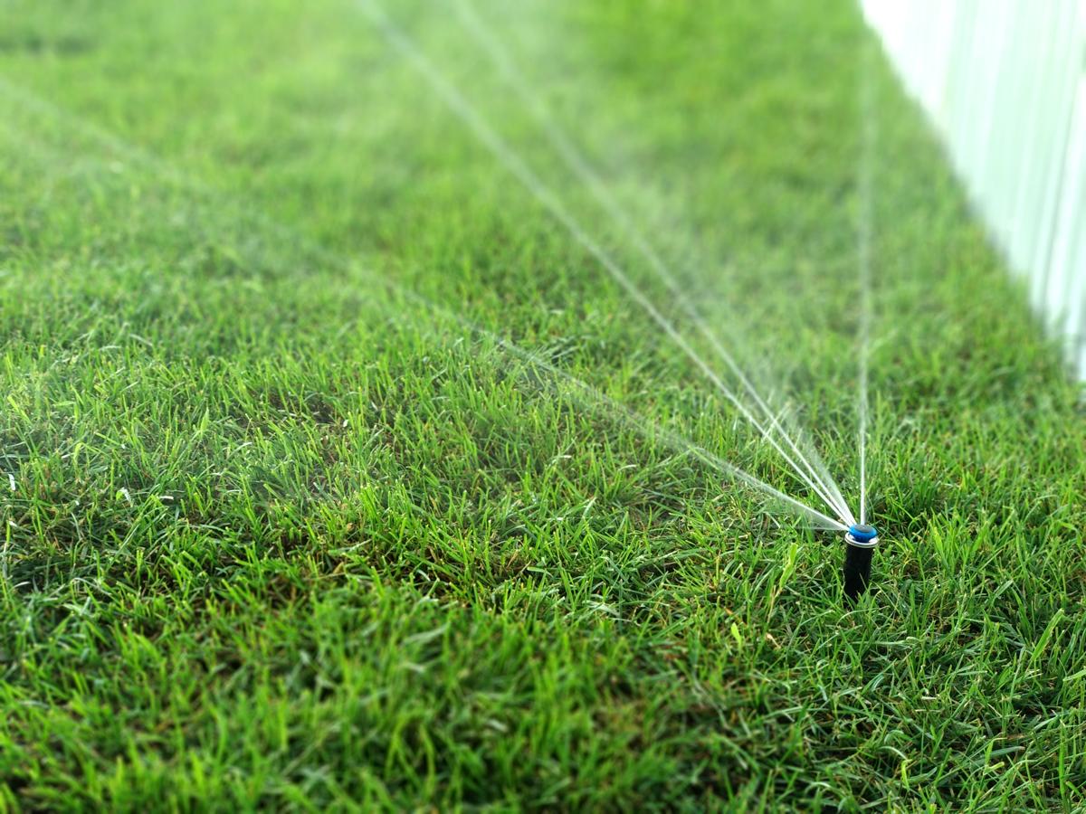 От правильного полива зависит качество газонной травы
