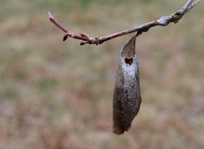 Зимой можно избавиться от вредителей