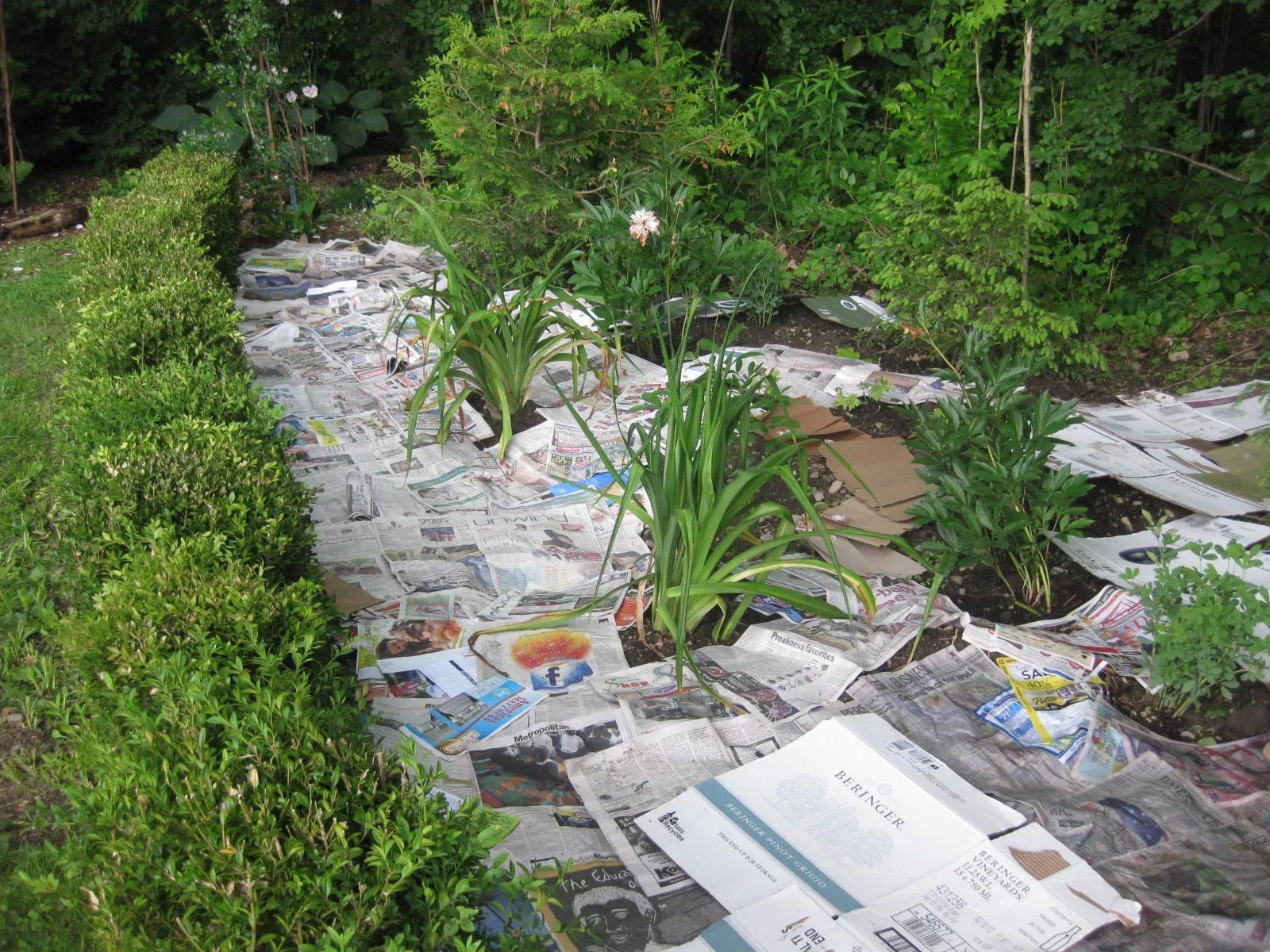 Газета спасет от сорняков