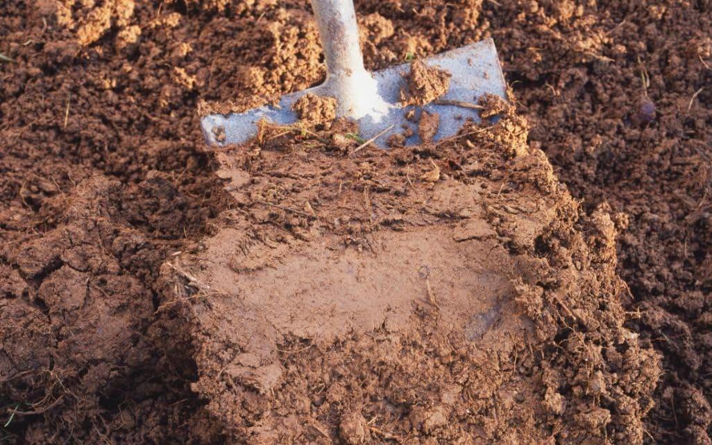 В хорошем грунте не должно быть глины