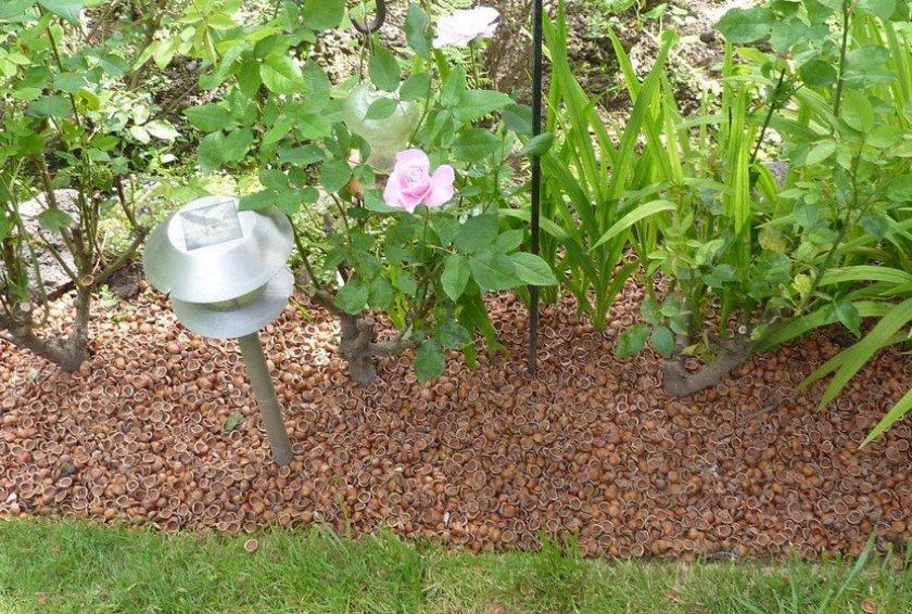 Скорлупа грецкого ореха в цветнике