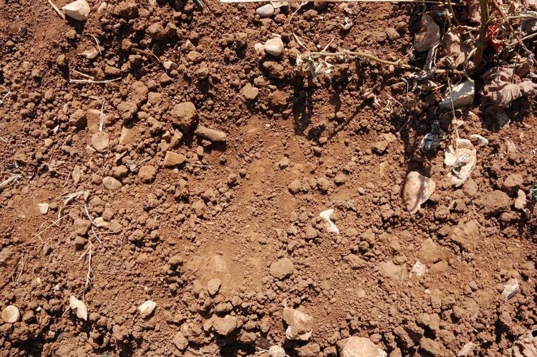 На супесчаные почвы расходуется больше подкормок