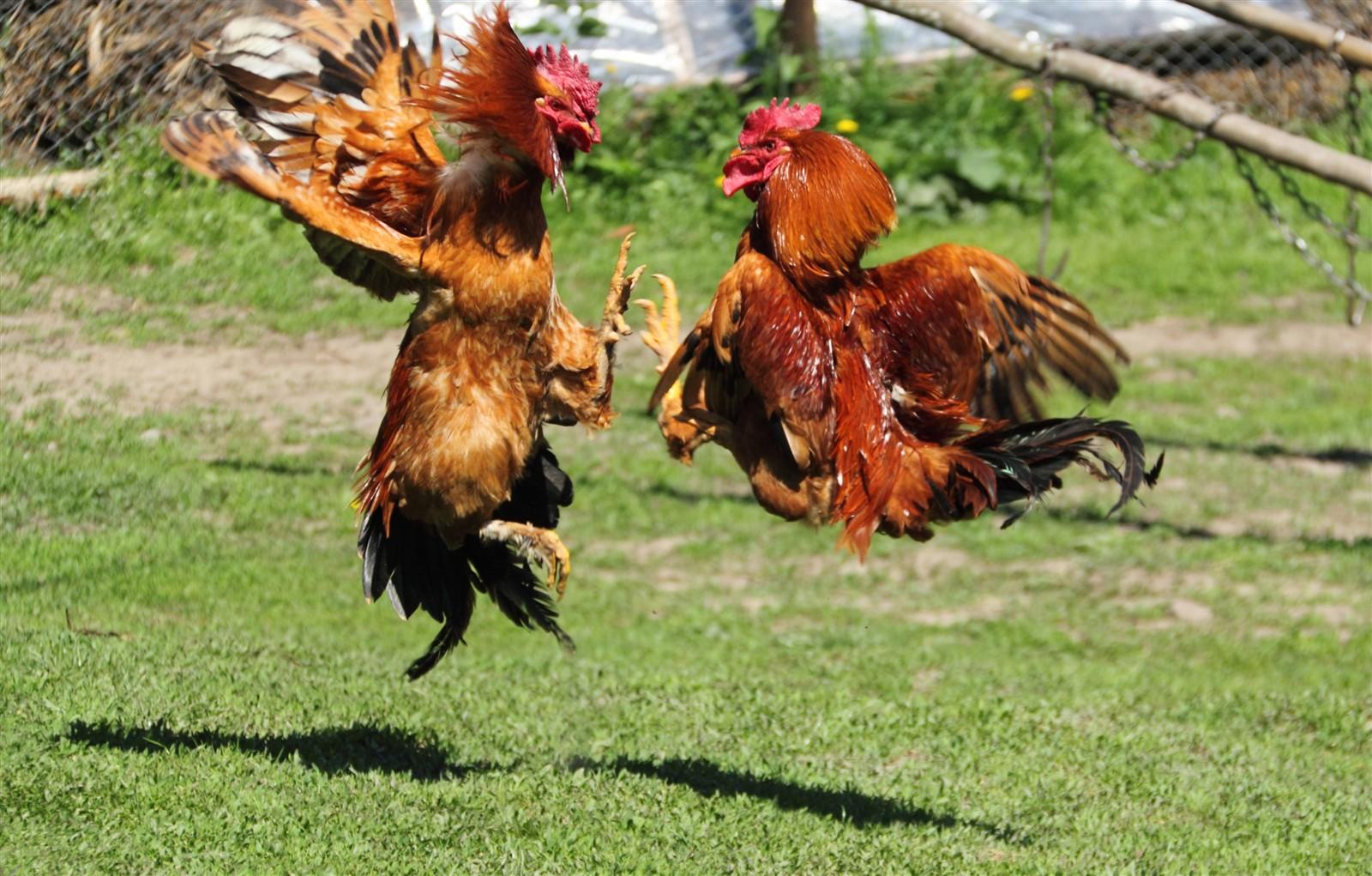 От проблемной птицы пора избавиться