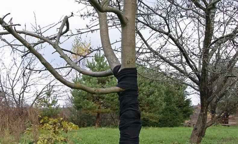 Важно не забывать защищать деревья от грызунов