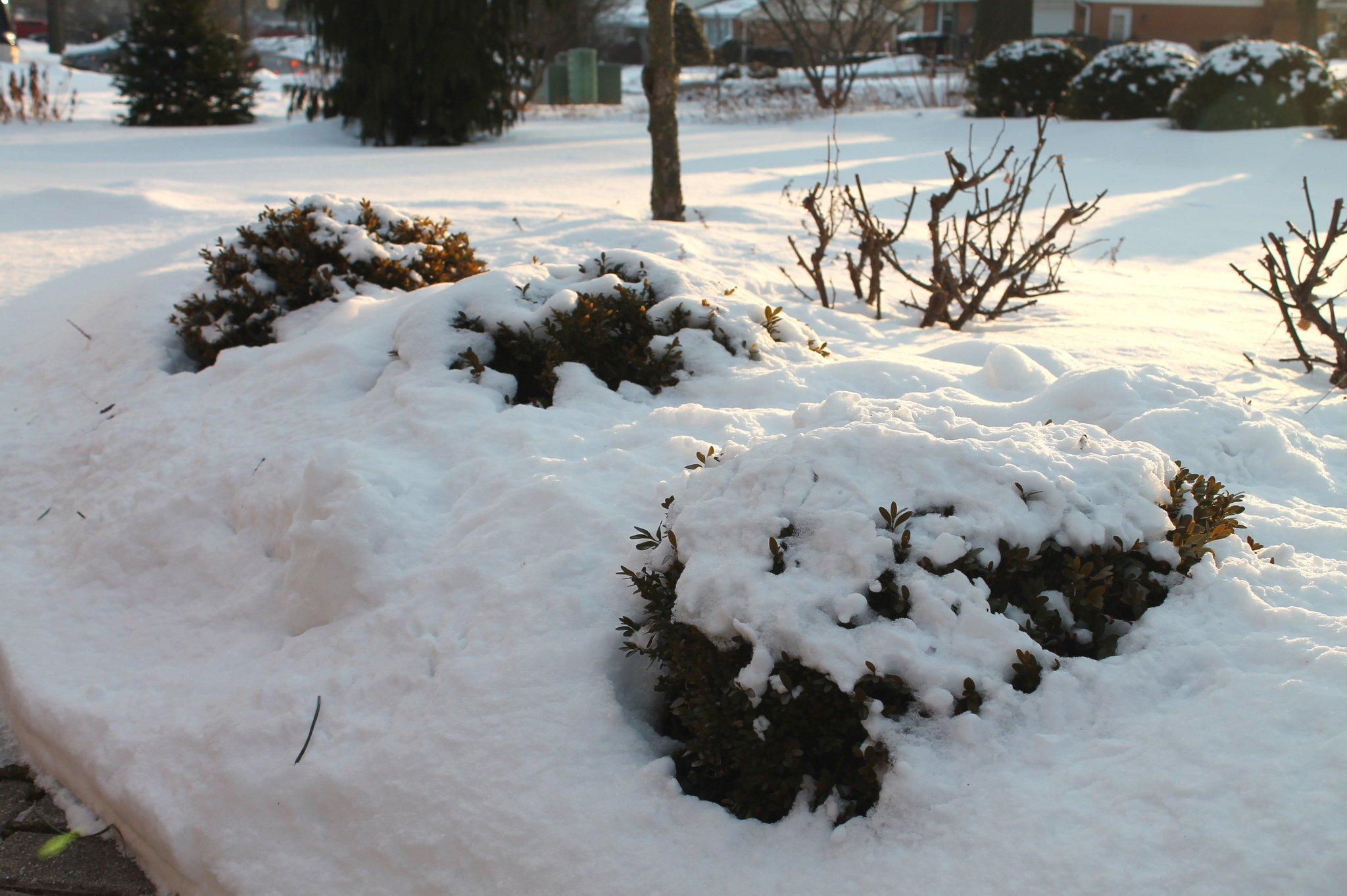 Защита растений снегом