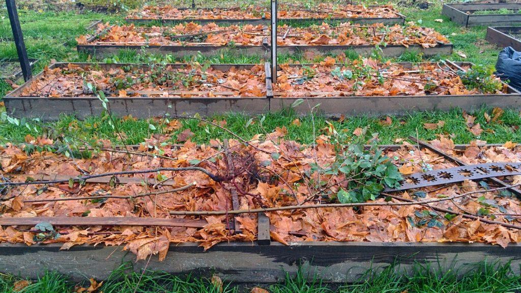 Осенью грядки мульчируют