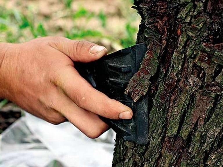 Очистка деревьев
