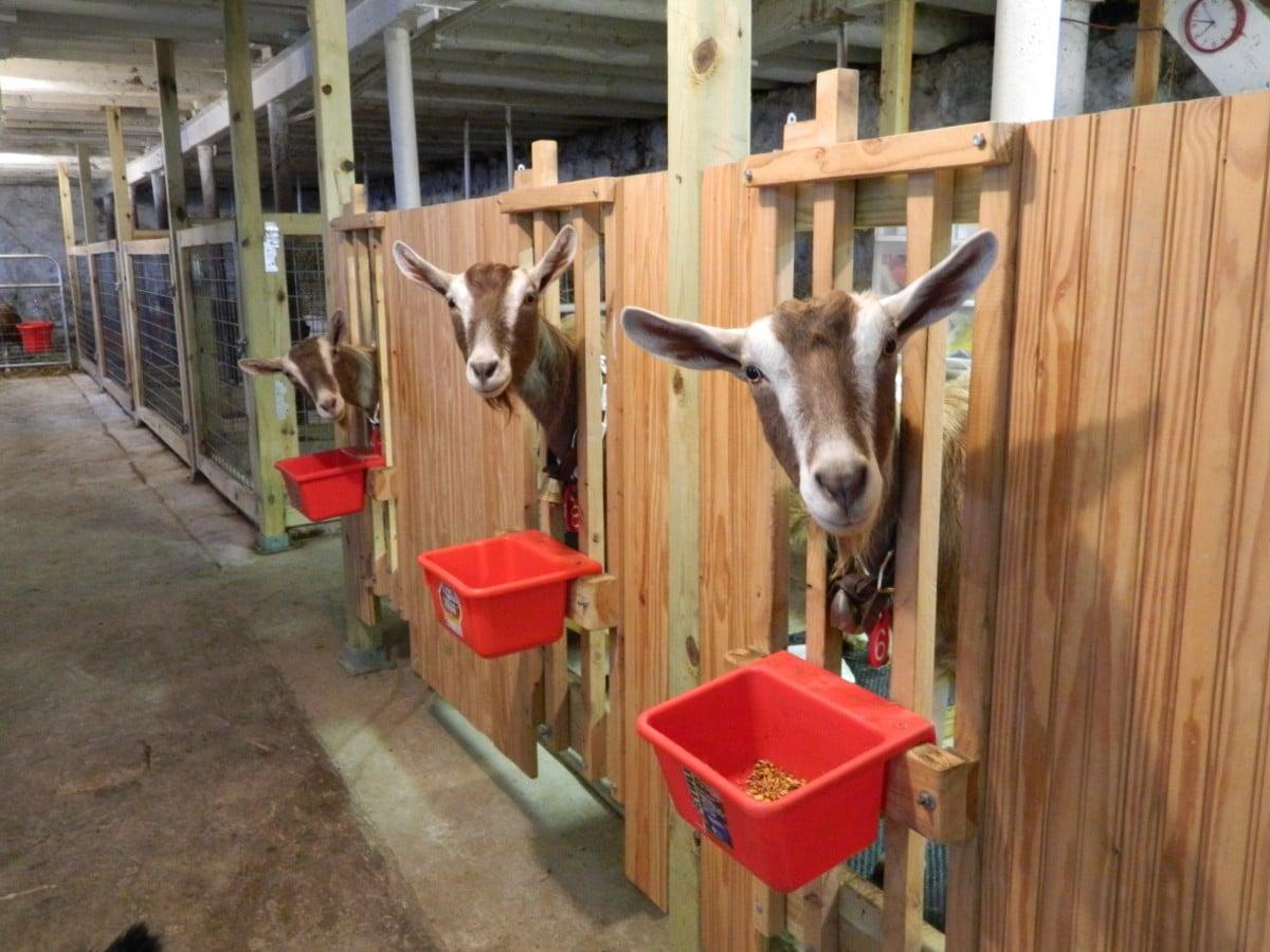 Пример помещения для коз
