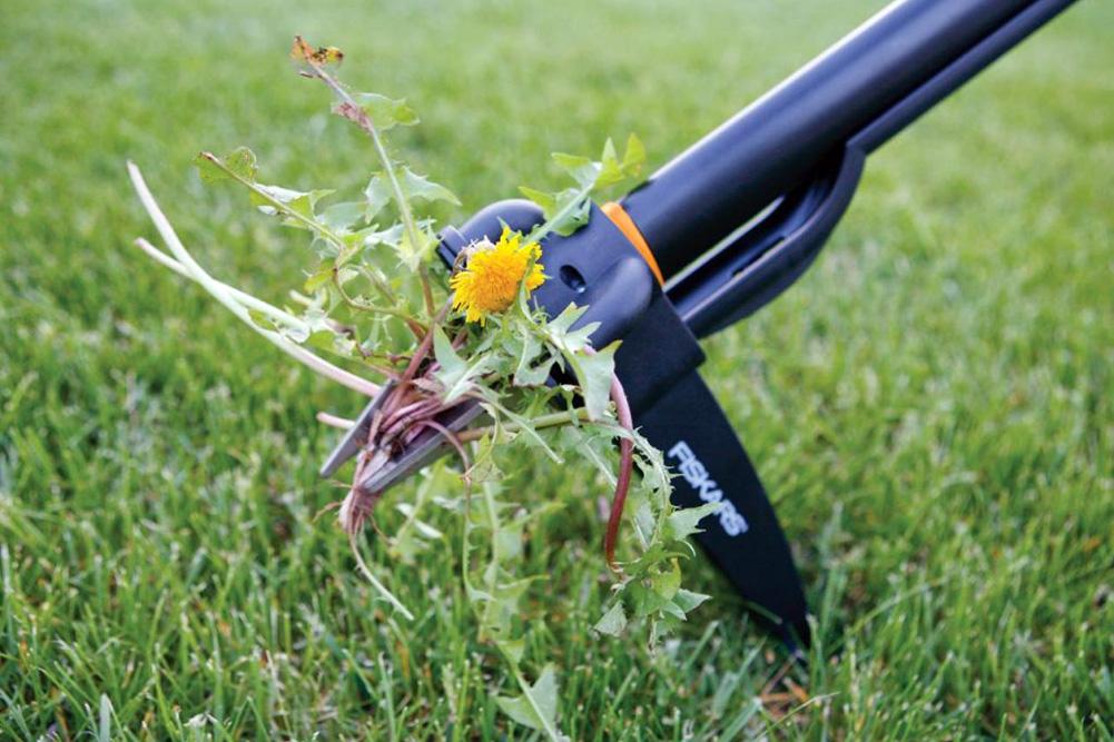 Прополка газона поможет справиться с сорняками