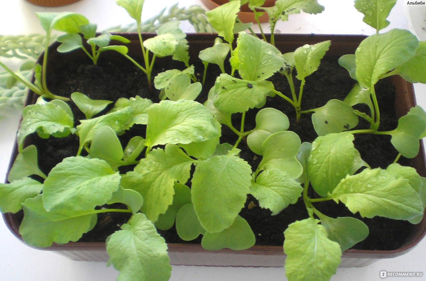 Редис подходит для выращивания в квартире