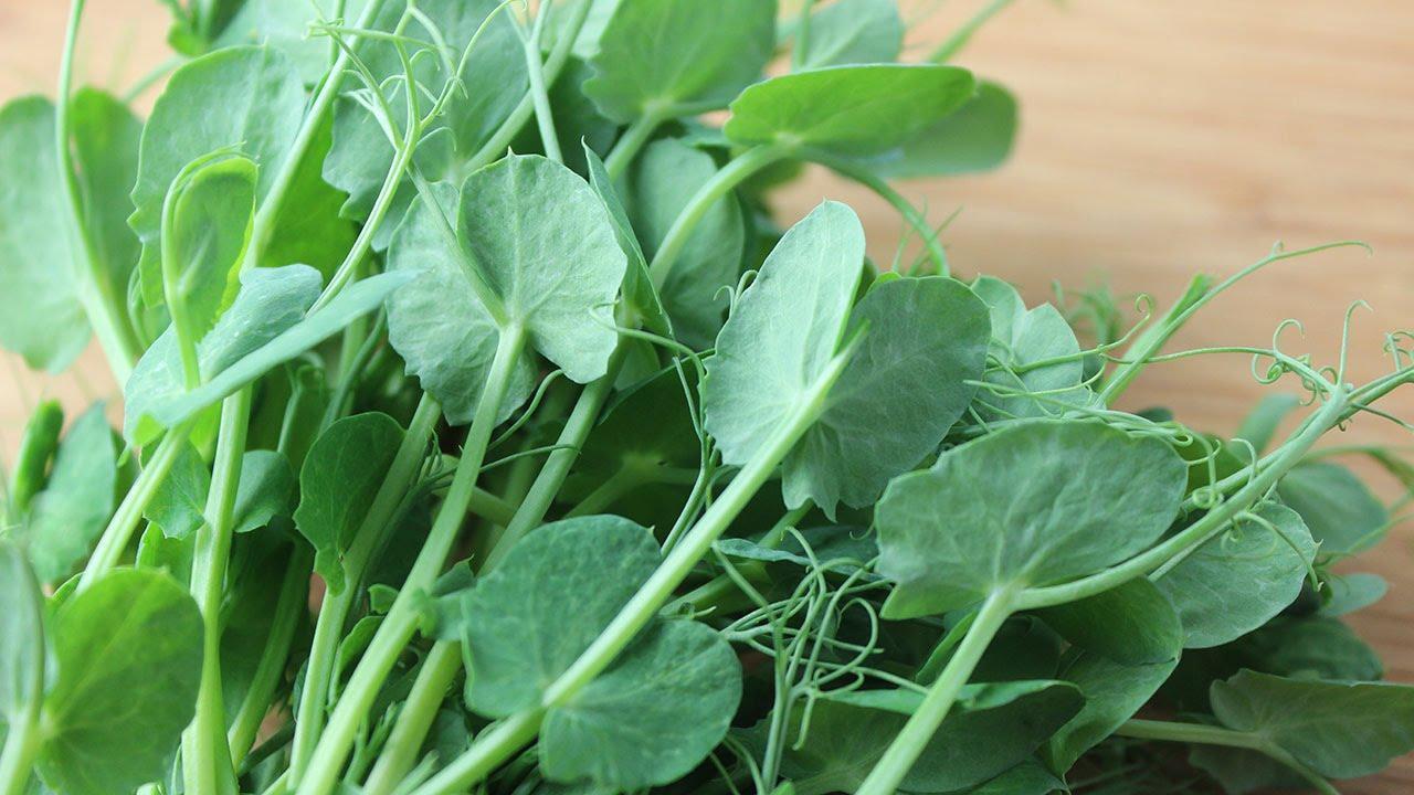Ростки содержат много витаминов
