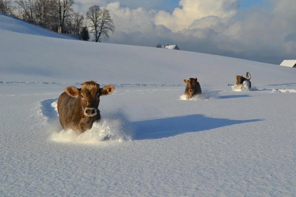 Снега не должно быть слишком много