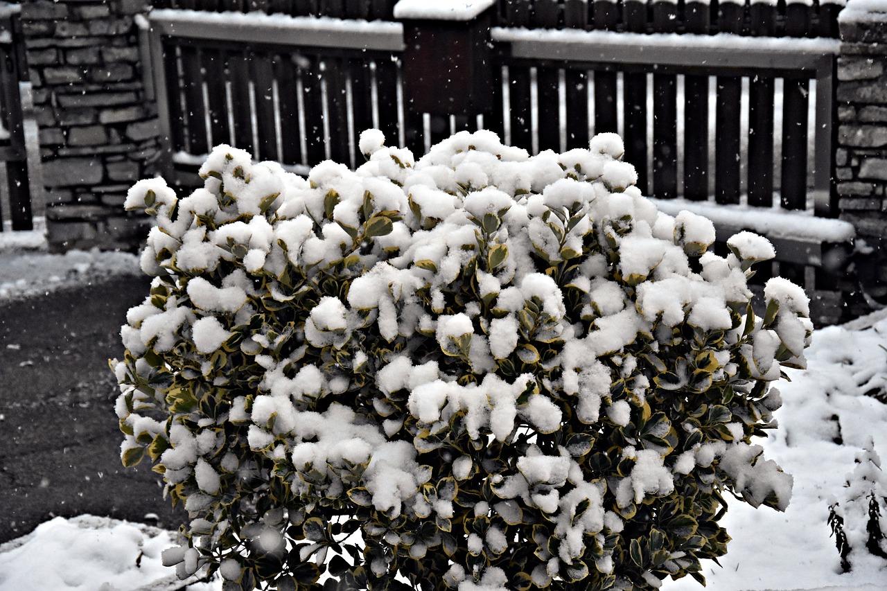Снег с растений нужно периодически стряхивать