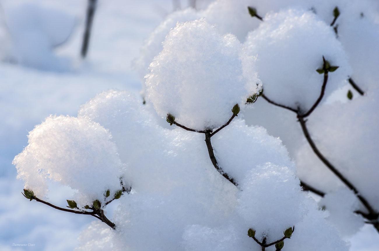 Снег приносит как вред, так и пользу