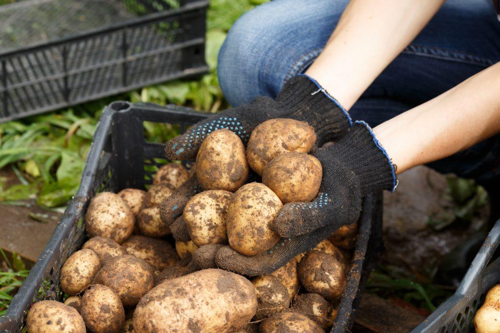 Картофель нужно просмотреть