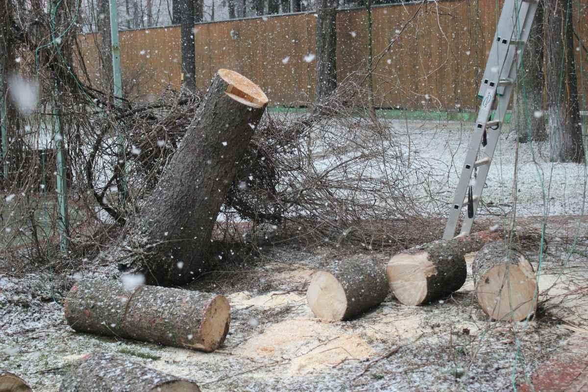 Можно избавиться от ненужных деревьев