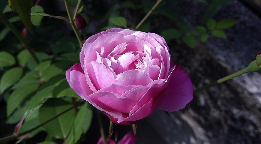 У цветов есть свой срок жизни