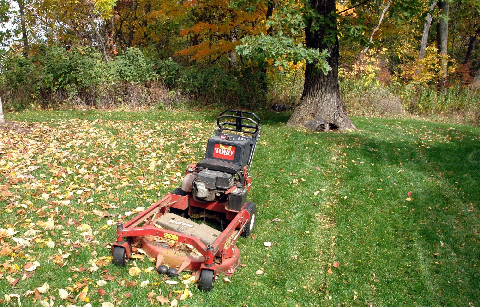 Осенняя стрижка газона