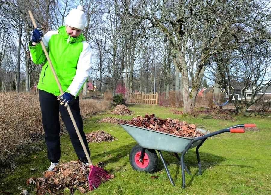 Уборка листьев - занятие важное
