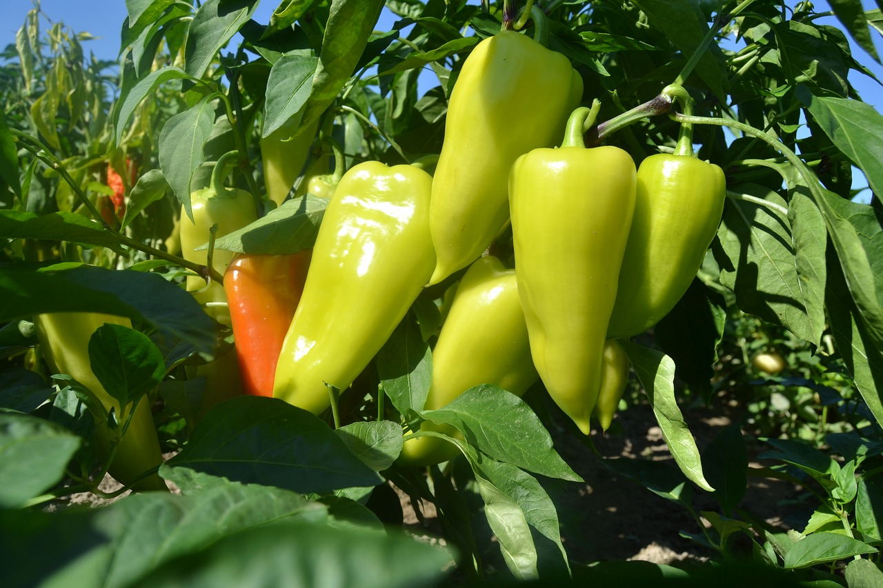 Без подкормок не будет хорошего урожая