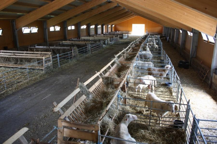 Крытое помещение для овец
