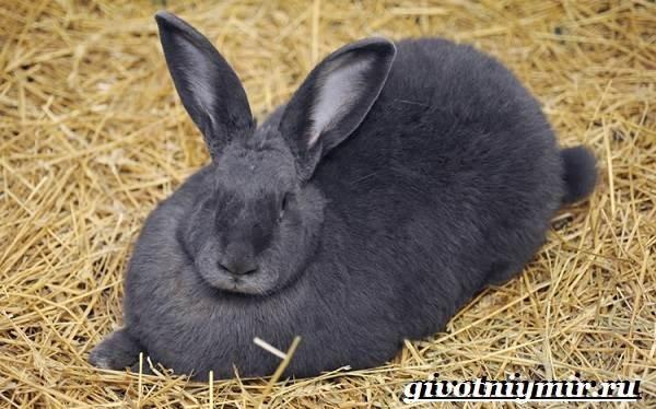 Содержание животных в крольчатнике