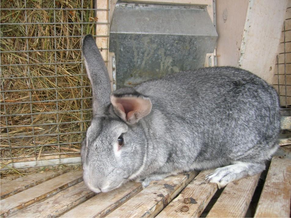 Удобная клетка для этих кроликов