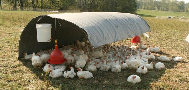 Обустройство навеса для цыплят