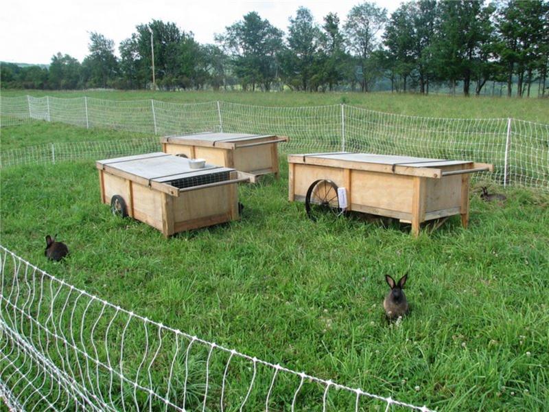 Вольеры с домиками для кроликов