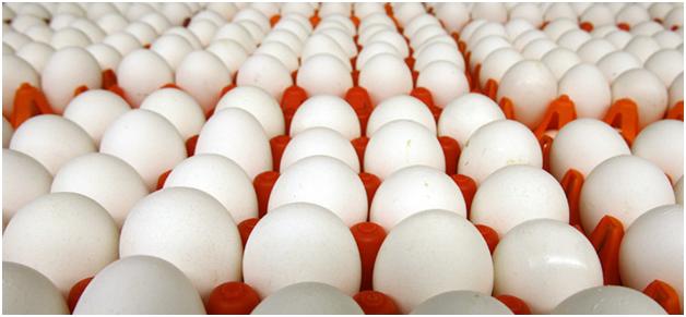 При хранении яйца тупым концом направляются вверх