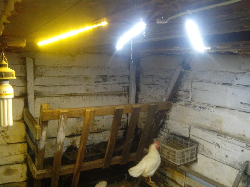 Лампы в курятнике зимой