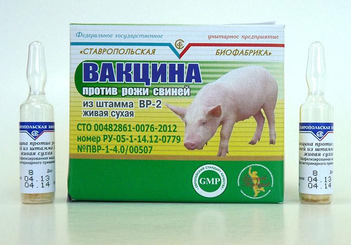 Вакцина от рожи для свиней, поросят