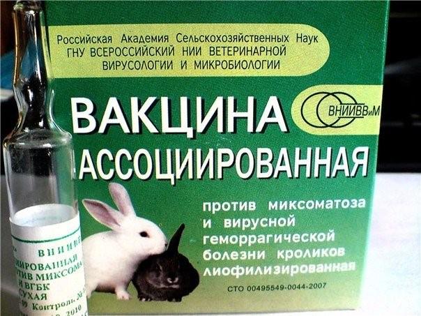 Вакцина против болезни