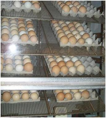 Яйца на хранение. Тупой конец смотрит вверх