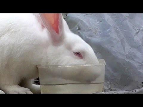 Кролику Трисульфон дают с водой