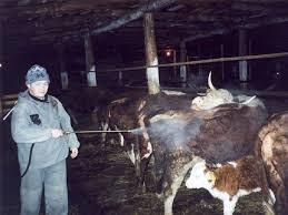 Опрыскивание скота