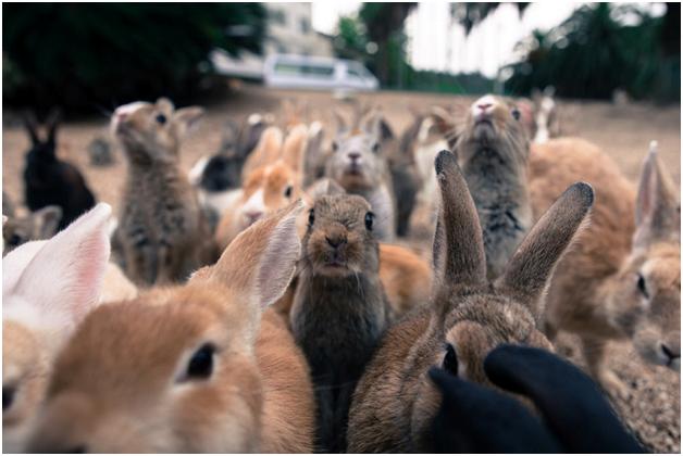 Поголовье кроликов