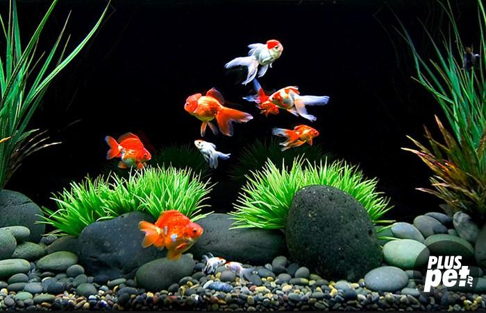 Аквариумные рыбки плавают в растворе Ронколейкина