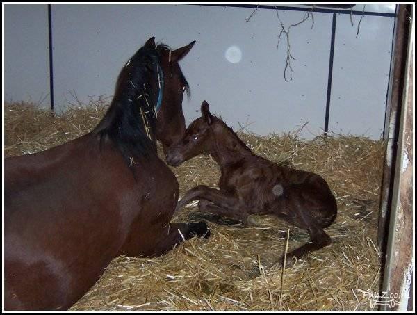 Чаще всего сновидения с этим красивым детенышем лошади является хорошим знаком и сулит успехи как в личной жизни, так и в бизнесе.