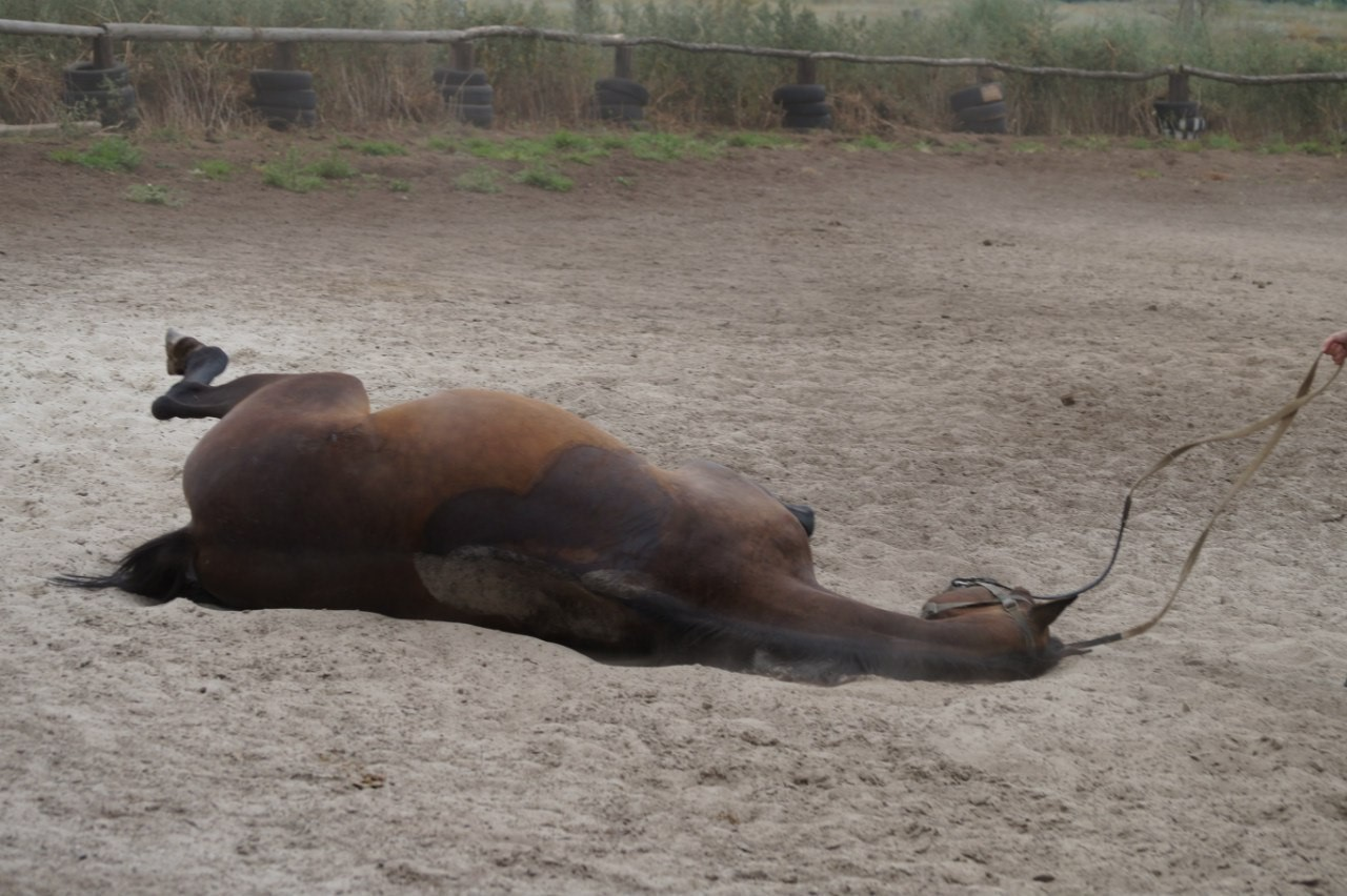Лошадь завалилась набок