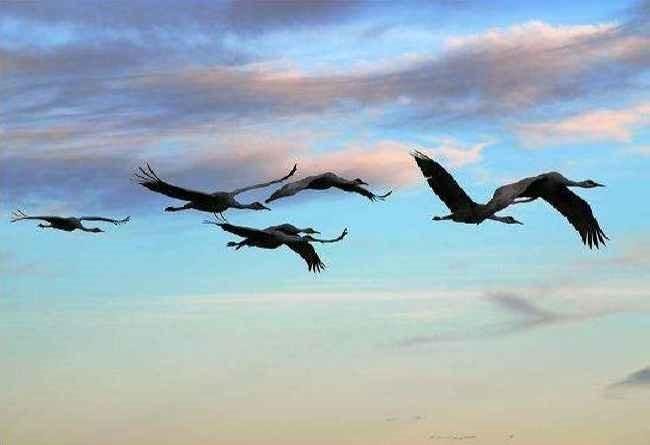 Птичий грипп летит