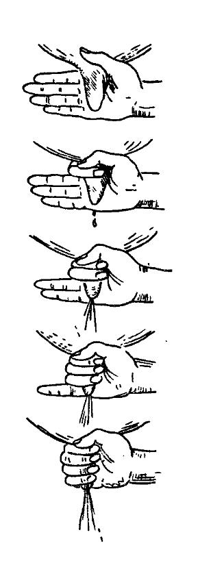 Техника доения