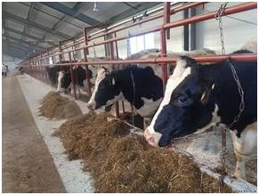 Помещение для кормления коров