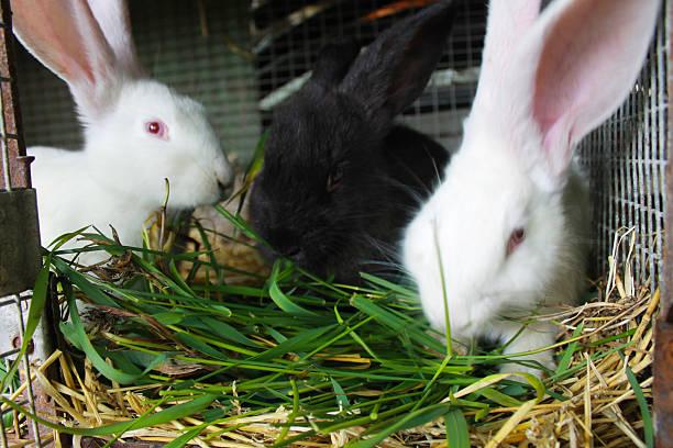 трава в рационе кроликов