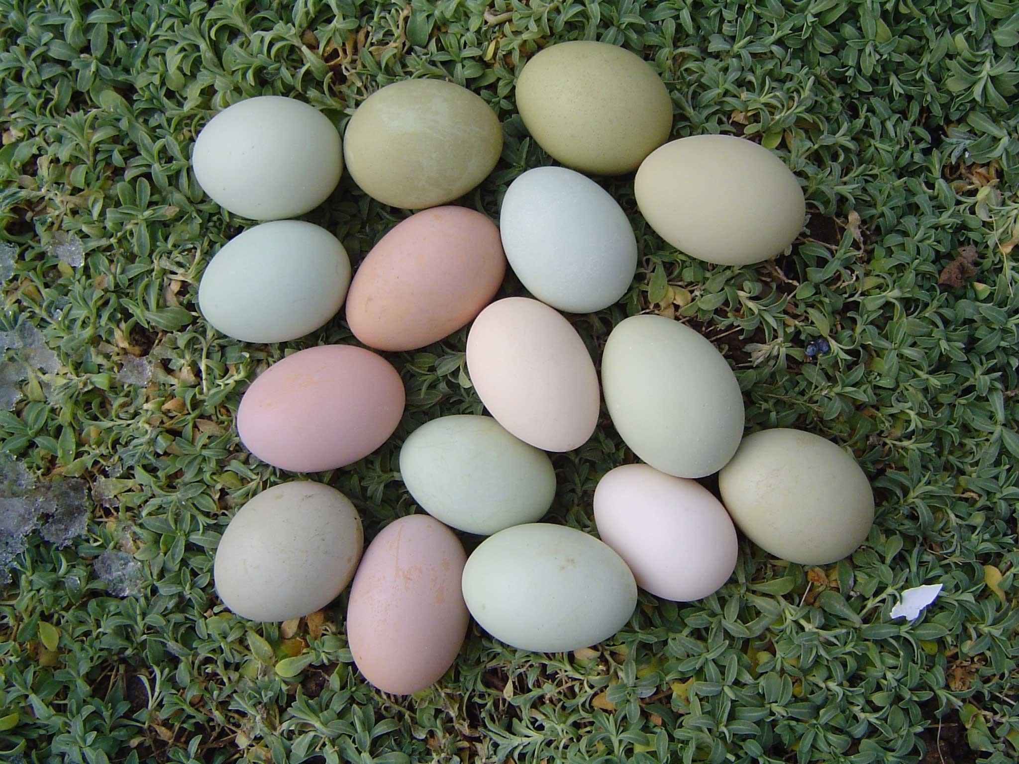 Яичная продукция
