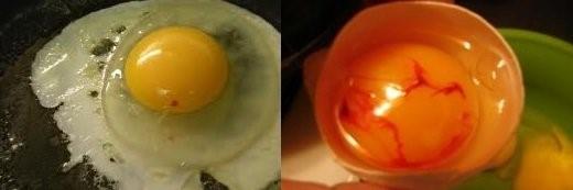 Кровь в куриных яйцах