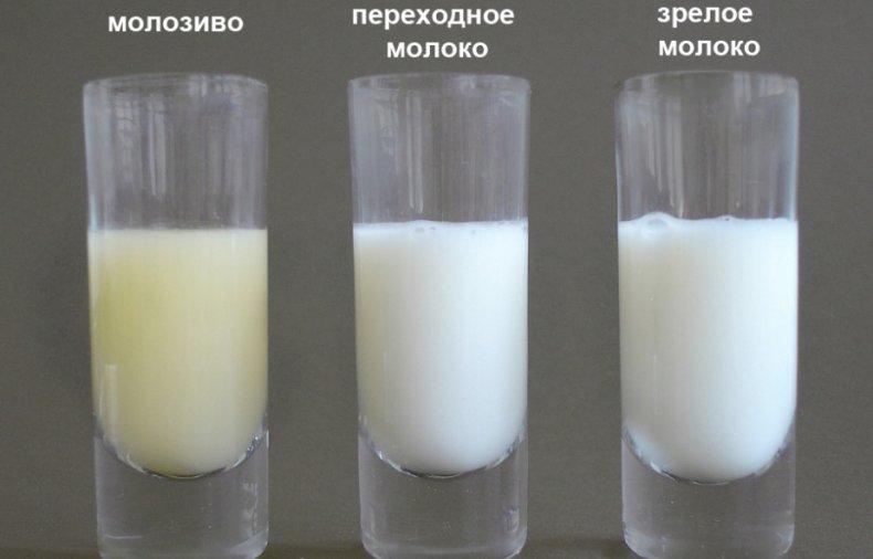 Отличие молозива от молока