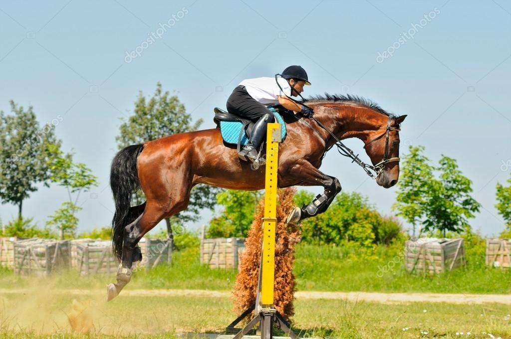 Спортивные лошади часто травмируются