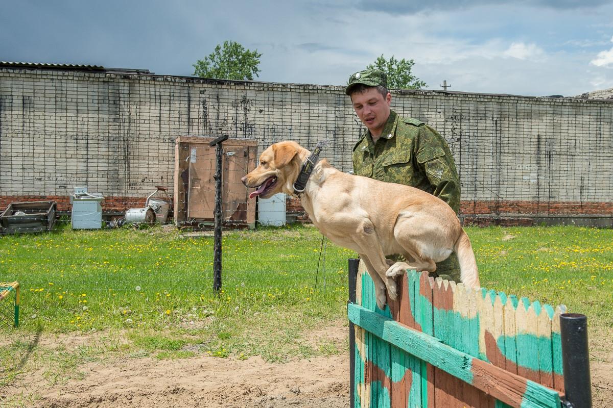 Служебным собакам может потребоваться Айнил