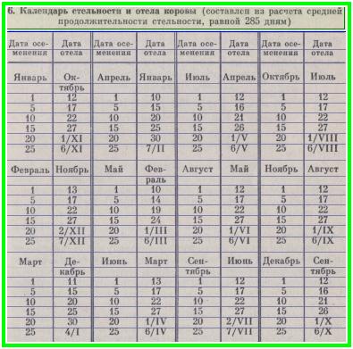 Таблица стельности и отела коровы